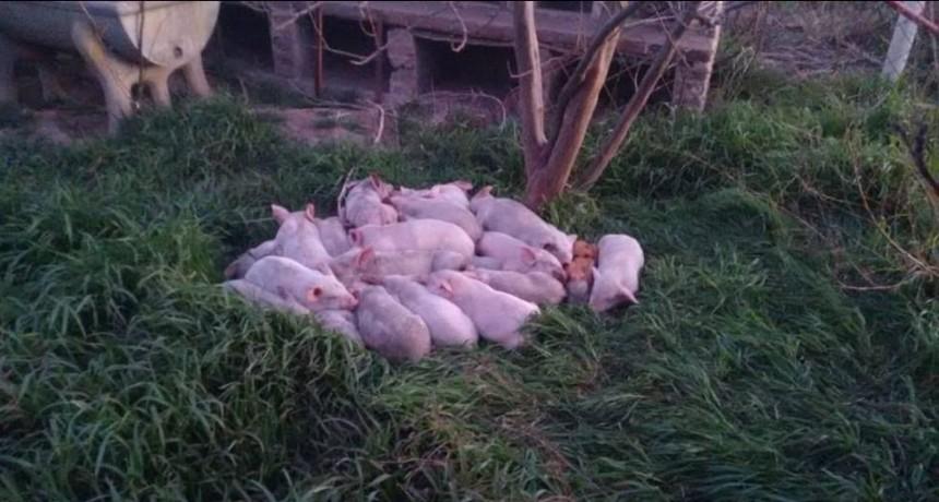 ANIMALES MUERTOS TRAS INCENDIO EN ZONA RURAL